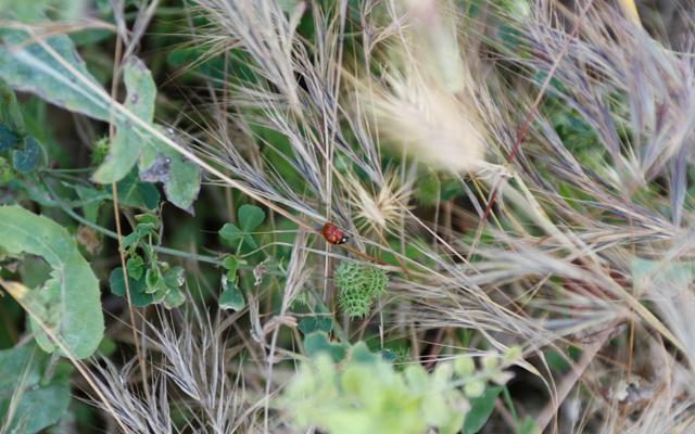 ladybird-john-hinde