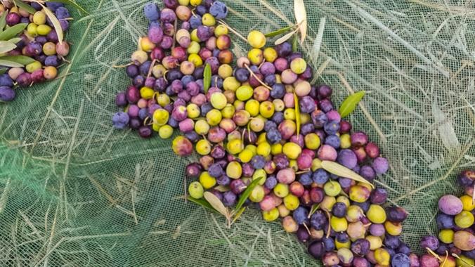son-alegre-olives-2