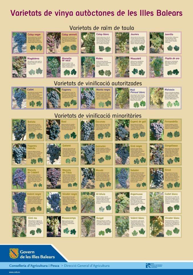varietats-de-vinyas-autoctones-mallorca