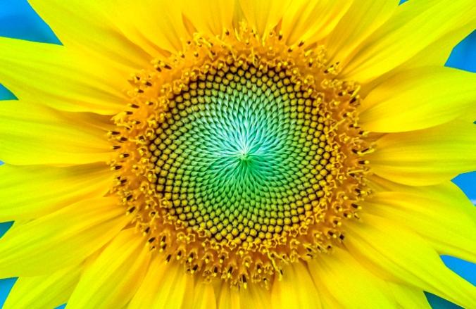 Fibonacci 18